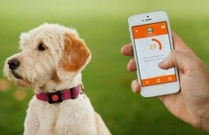 5 Technologies for Helping the Animals