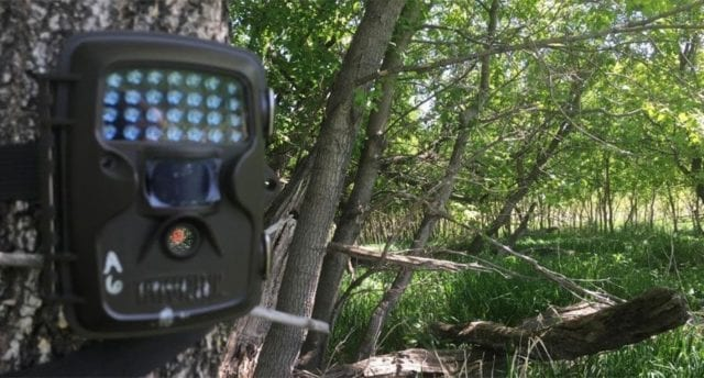 How To Choose The Best Game Camera