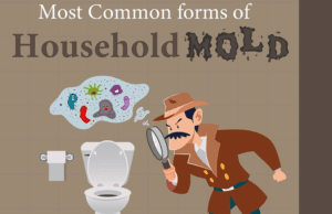 Common Household Molds