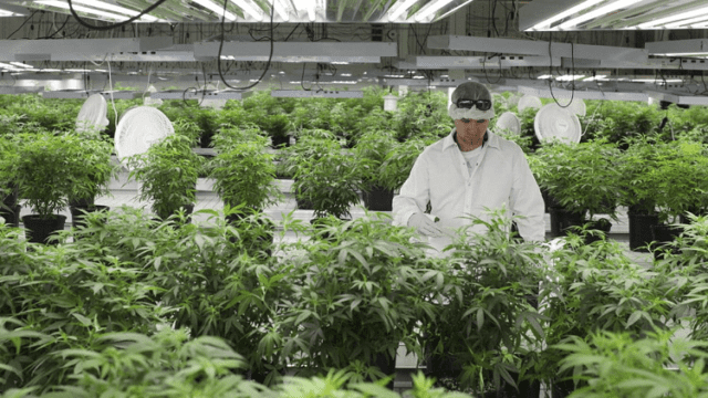 How Tech Solutions Are Keeping The Cannabis Business Profitable