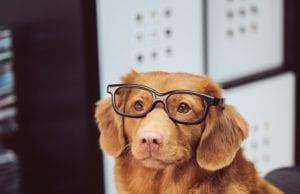 A Dog Wearing Glasses