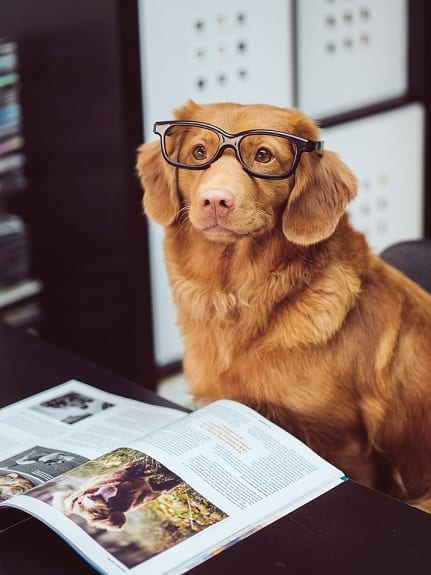 A Dog Wearing Glasses