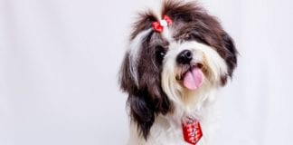 Valentine's Day Gift Ideas for Dog Lovers