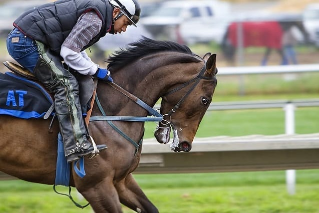 Best Gadgets for Horse Owners