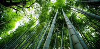 Bamboo - Sustainable Materials for Home Renovations